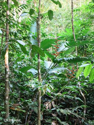 lowland rainforest, Costa Rica