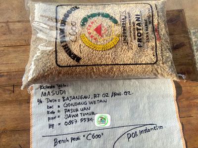 Benih Padi Pesanan    MASUDI Pasuruan, Jatim.    Benih Sebelum di Packing.