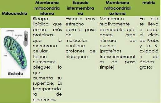 Biología Celular Organelos Celulares Practica De