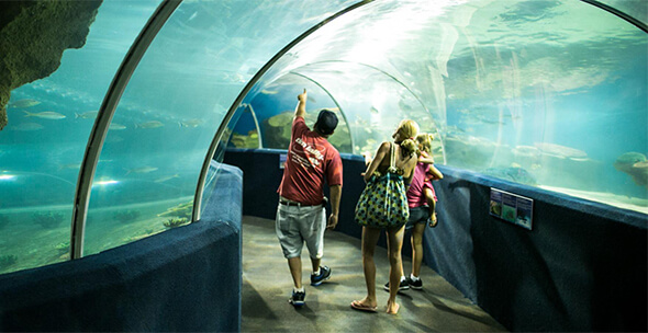 5 Top Educational Family Trips for Kids