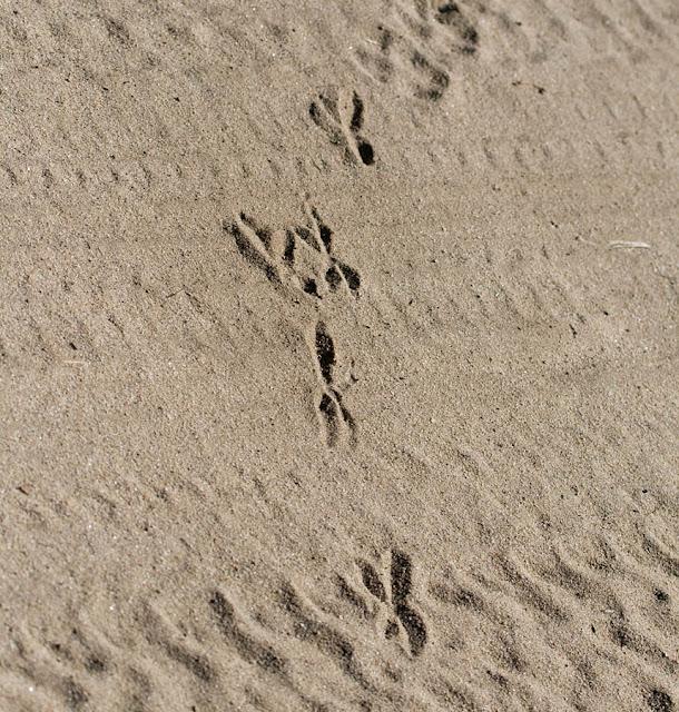 roadrunner tracks