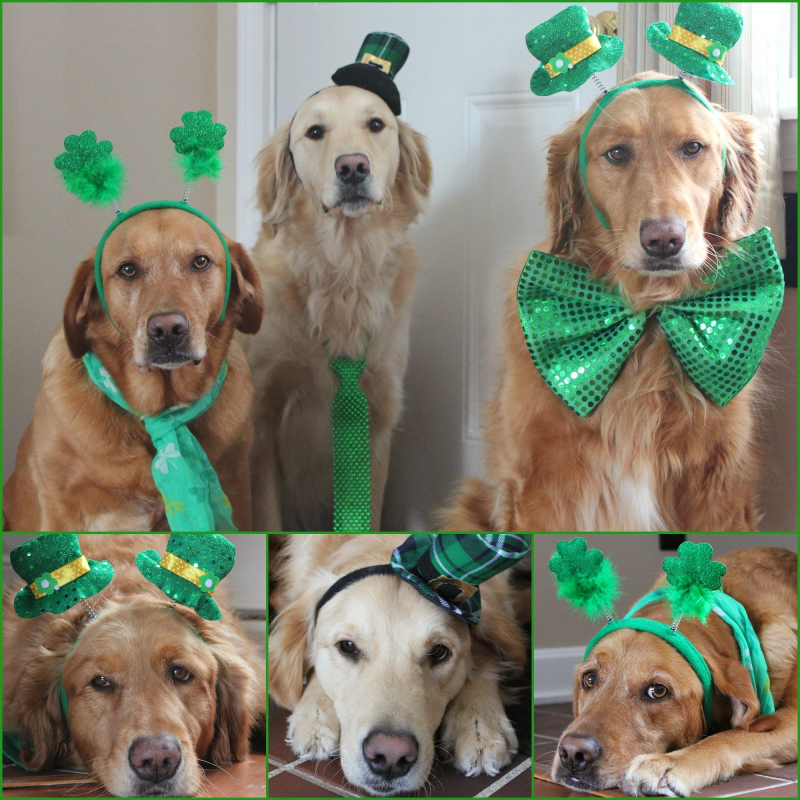 dogs dressed up for st patricks day