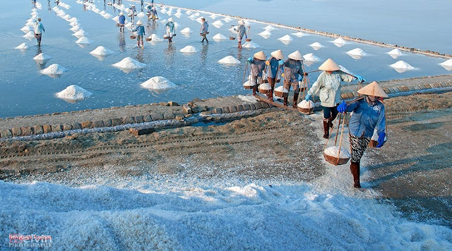 The salt fields near Van Phong Bay, Khanh Hoa province 12