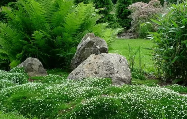 мшанка, папоротник, камни