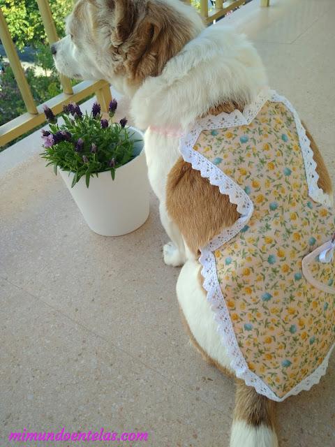 hacer delantales vintage para mascotas