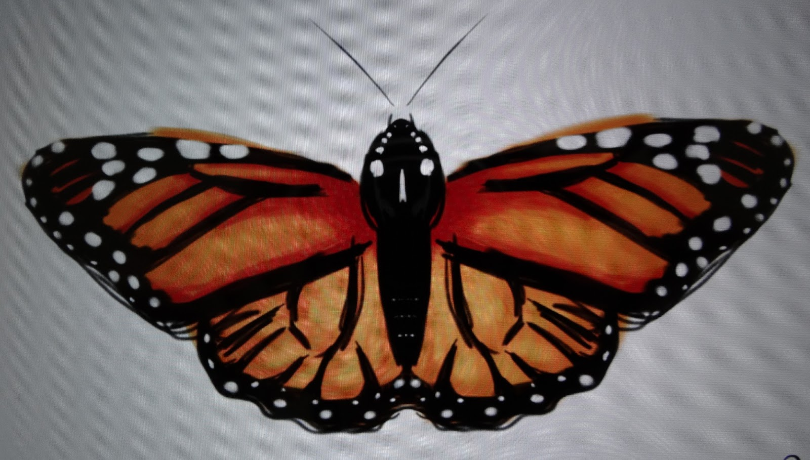 Easily draw a perfectly symmetric Butterfly on the iPad ...