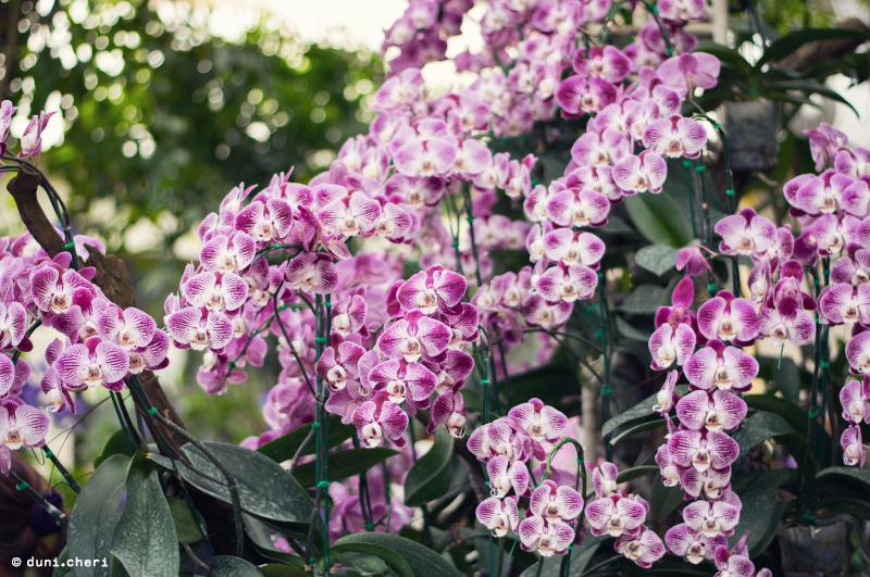 thailand orchideen park