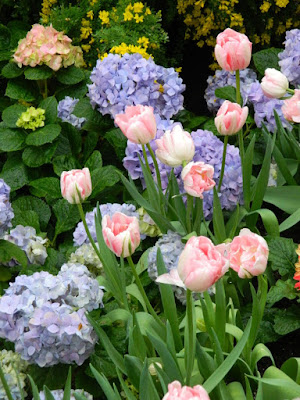 Centennial Park Conservatory 2018 Easter Flower Show pink Parrot tulips and hydrangeas by garden muses-not another Toronto gardening blog