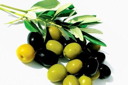 Inilah manfaat buah zaitun untuk kesehatan