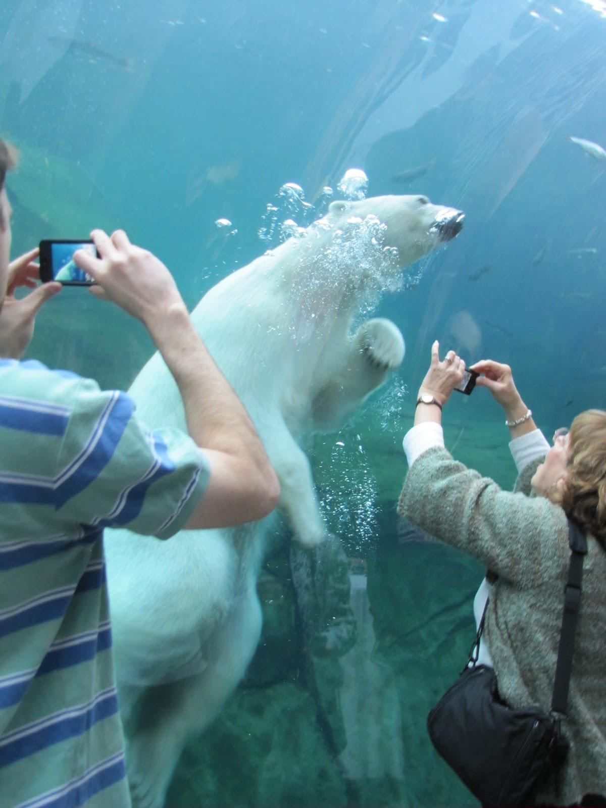 Animal Planet Wallpaper My Polar Bear Friends And Friends Of Polar Bears Top