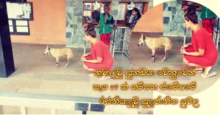 https://www.gossiplankanews.com/2019/01/07-dog-gampaha-station.html#more