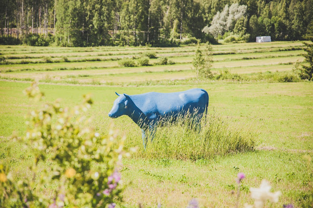 sininen lehmä velaatta