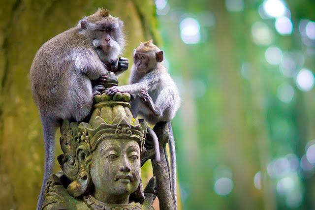 30+ Tempat Wisata Bali Yang Awesome Banget
