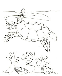 Best Image Of Hawksbill Turtle Coloring Page