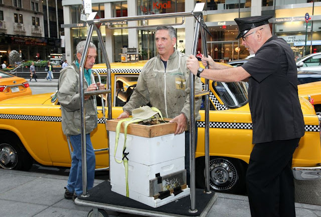 Transporting the bees to the New York Hilton Midtown rooftop