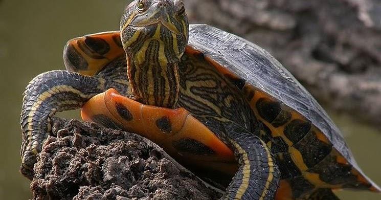 Pirana aquarium come allestire un acquario per tartarughe for Acquario per tartarughe