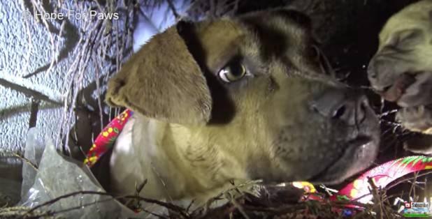 Σκύλος:Πως να αντιμετωπίσουμε τα προβλήματα κατά τη διάρκεια της βόλτας