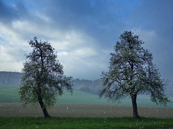 Aprilschnee, April, Schnee, grün, Wiese