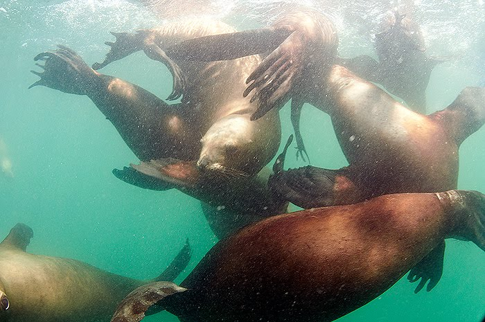 Dive with sea lions in Peninsula Valdes Patagonia Argentina
