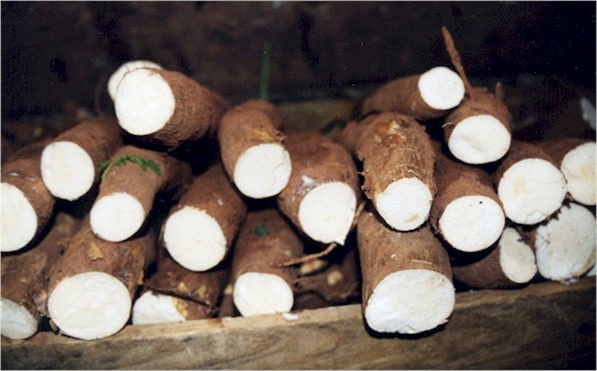 Cassava tube