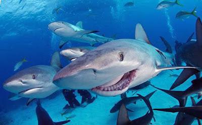 Lustiger Lächelnder Hai
