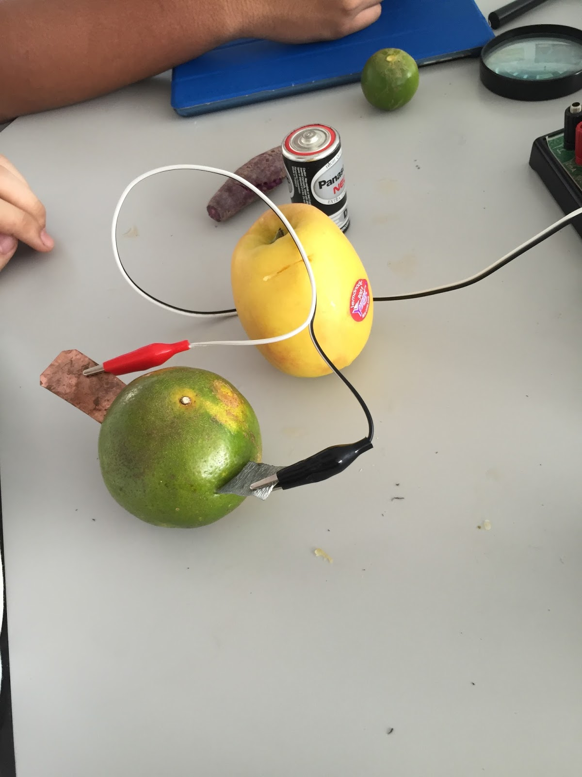 fruit battery conclusion The more you squeezed the fruit, the more electricity the fruit would produce if you put the pennies and the nail to the wrong color alligator clip it would create negative energy if a larger fruit is used to make a fruit battery, then it will generate more energy.
