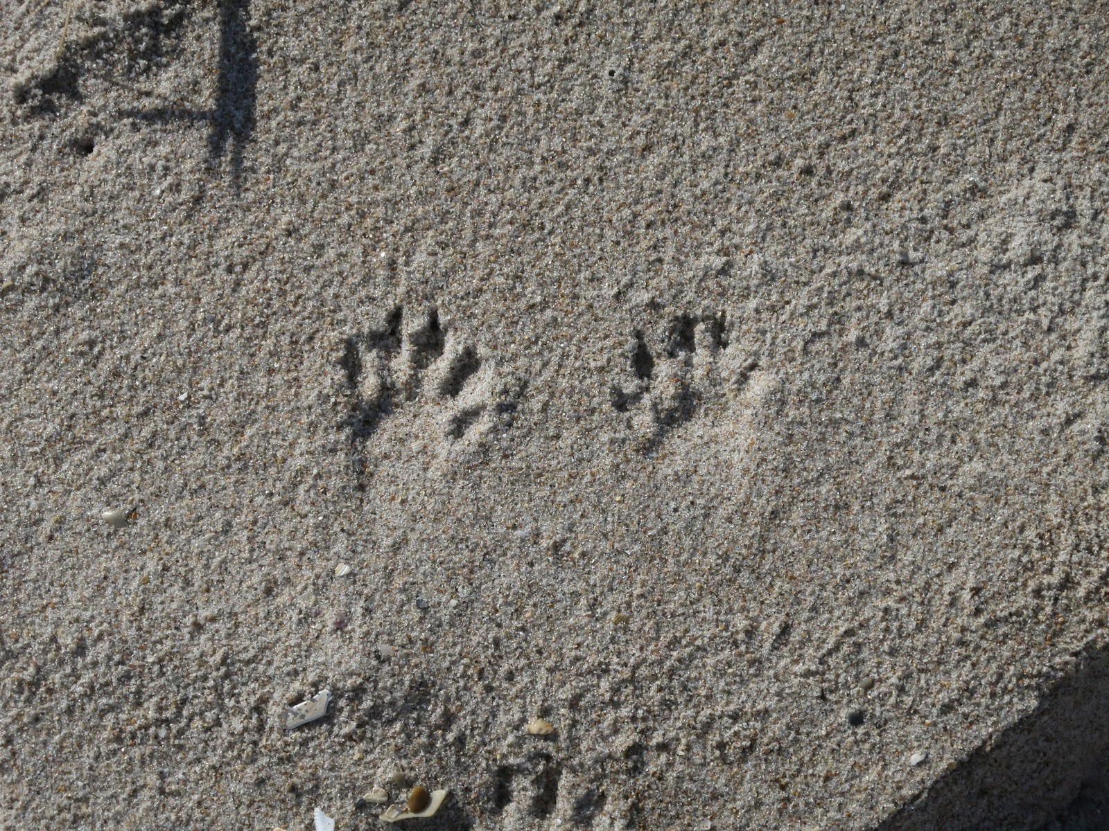 Around The Bend: Leave Only Footprints
