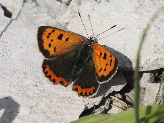 Portland Bird Observatory and Field Centre: 7th June