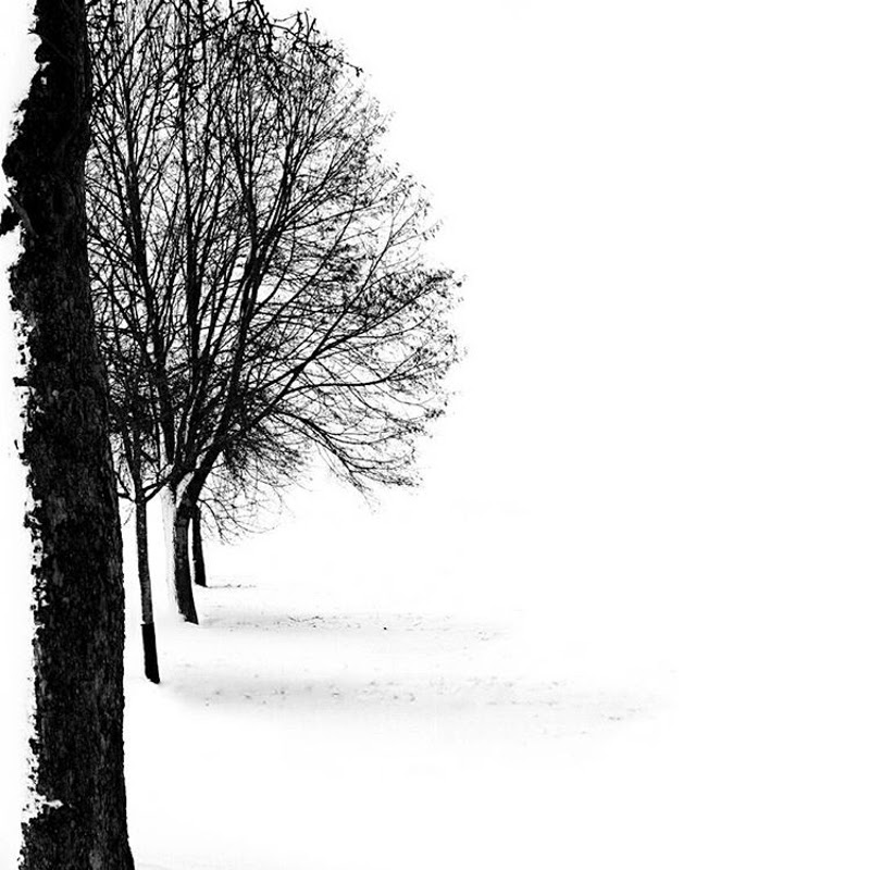 Nature by Minimalist Photographer Karin Hetzlinger from Austria.
