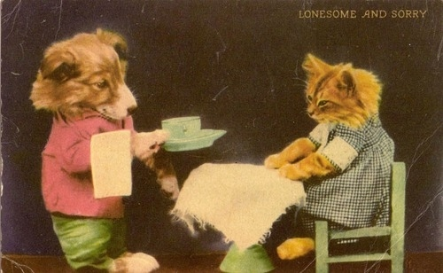 Vintage Pictures Of Cats And Dogs Dressed As People