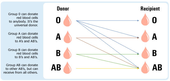 Which blood types are compatible?