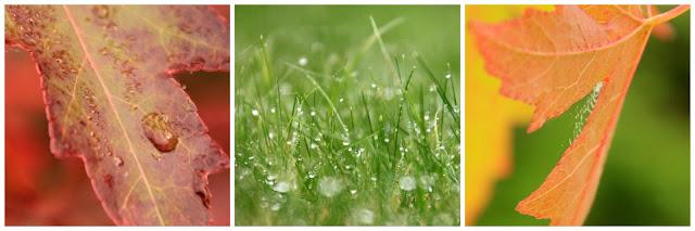 Balade pluvieuse dans le jardin
