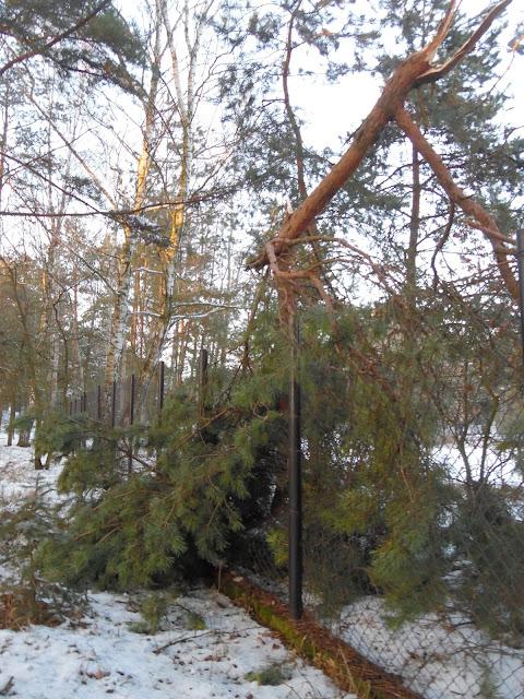 uszkodzone ogrodzenie