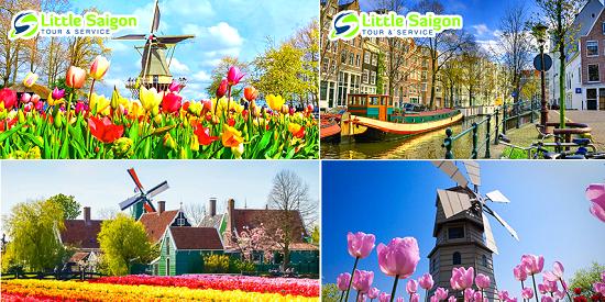 du lịch Hà Lan xem cối xoay gió và cánh đồng hoa tulip