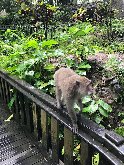 tempio sacro delle scimmie ubud