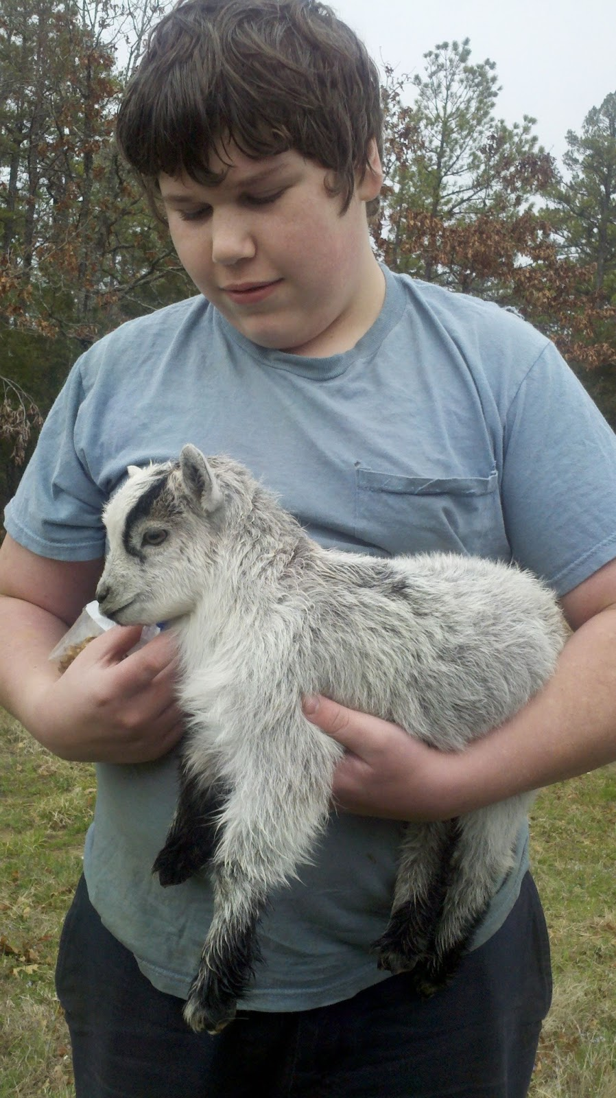 Countrified Hicks Our Baby Nigerian Dwarf Goat