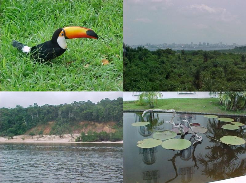 Biodiversidade da Floresta Amazônica