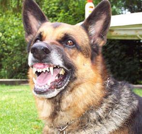 como evitar la agresividad del perro