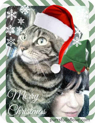 cat and mum christmas selfie