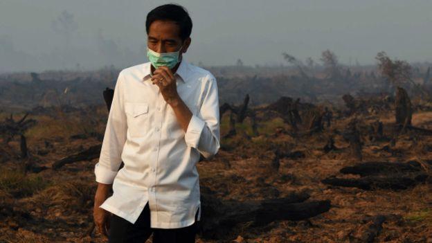 Divonis Bersalah soal Karhutla, Jokowi Bilang Begini
