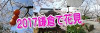 2017鎌倉の桜