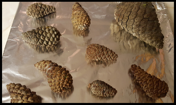 Baking Pine Cones