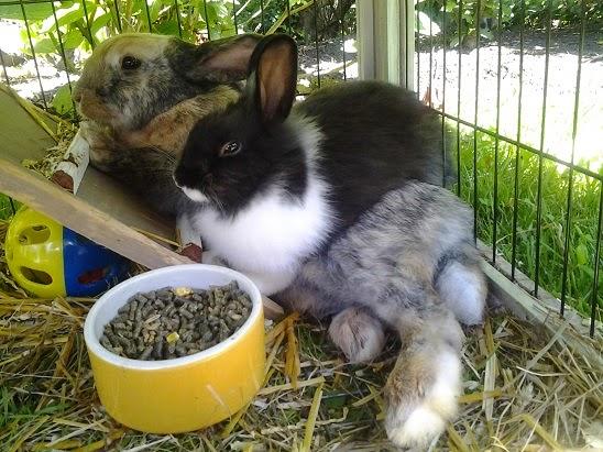 twee konijnen gezellig samen