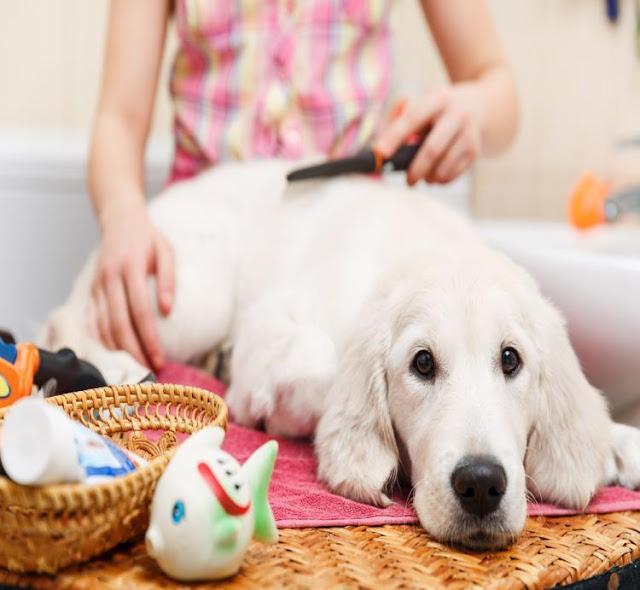 Chăm sóc lông và da cho chó đúng cách