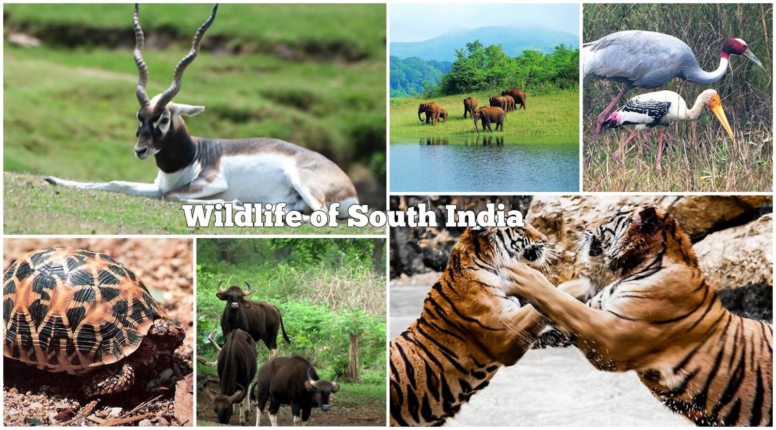 Top 25 Wildlife Sanctuaries in India