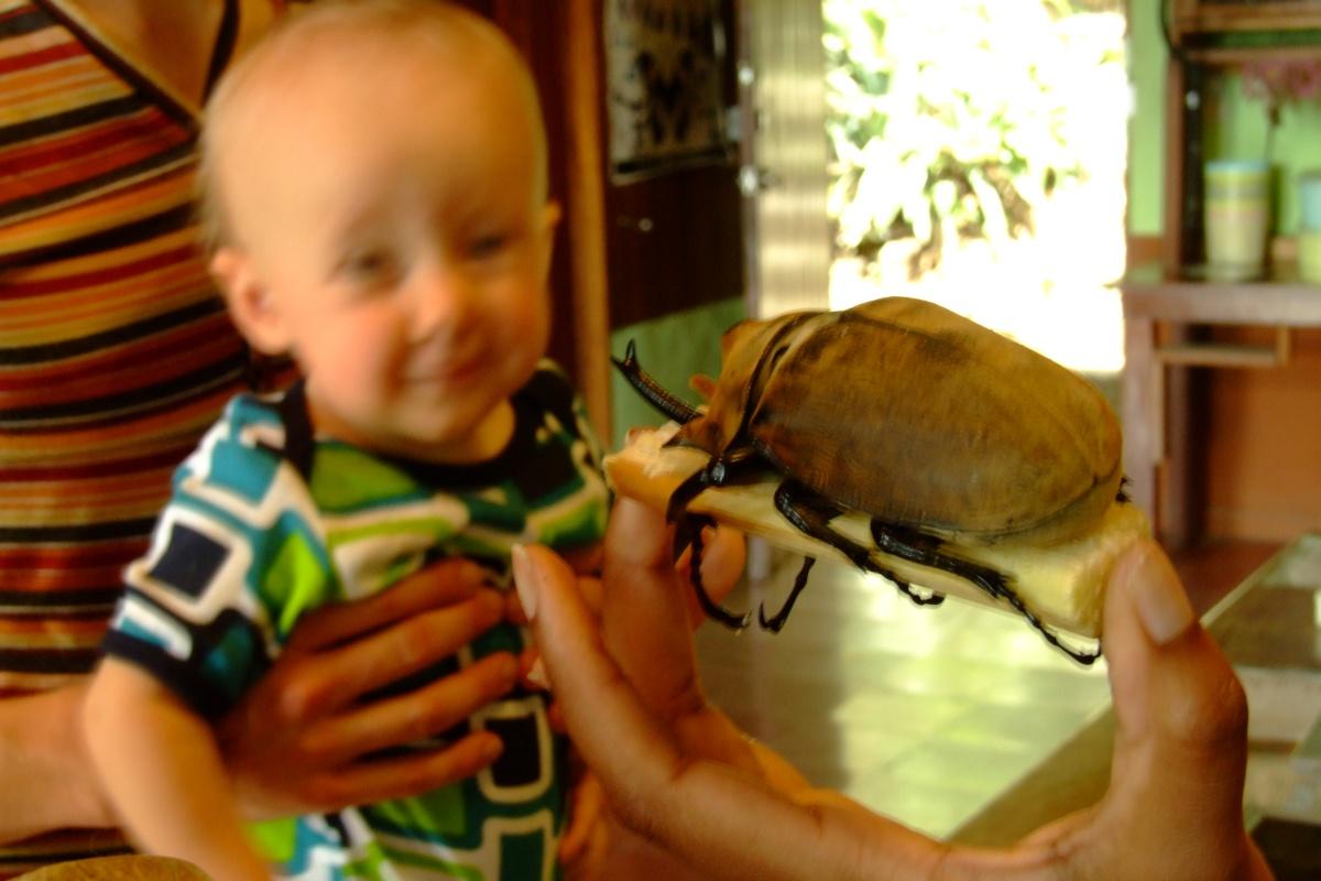 großer goldener käfer