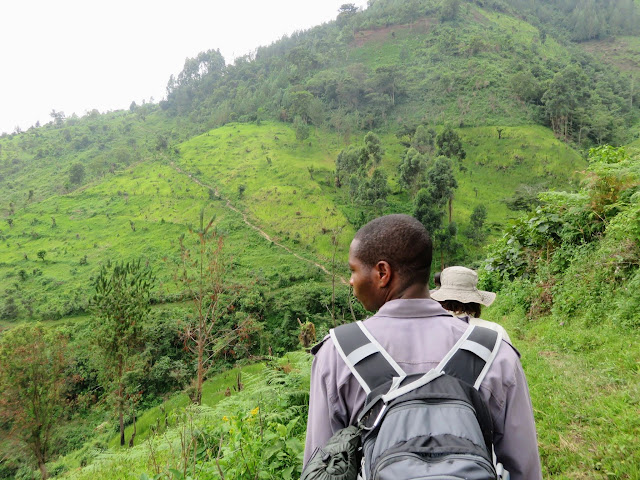 Hiking to the Bwindi Impenetrable Forest to search for the Nkuringo Family of Mountain gorillas