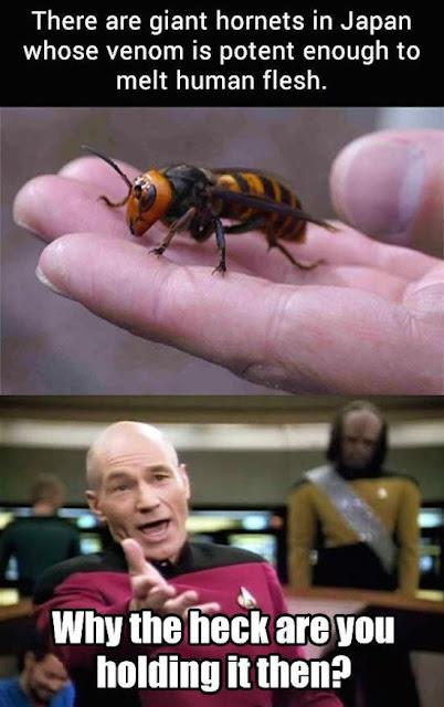 Hornets in Japan