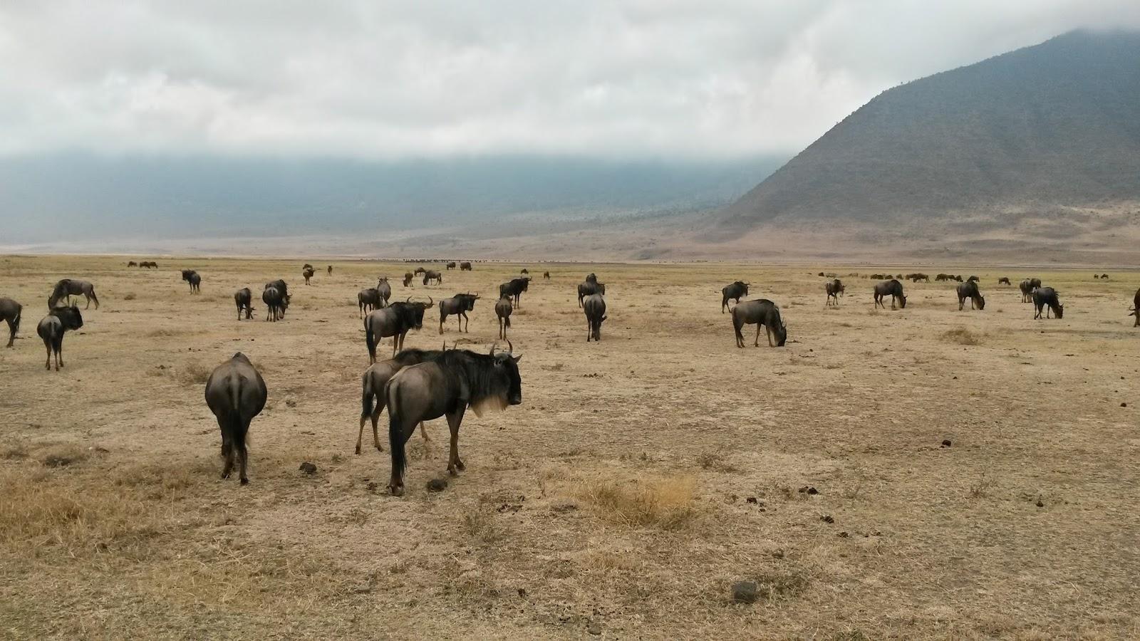 ngorongoro conservation area africa afrika