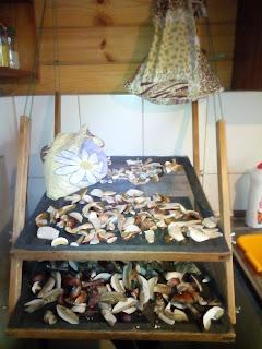 Suszenie grzybów.